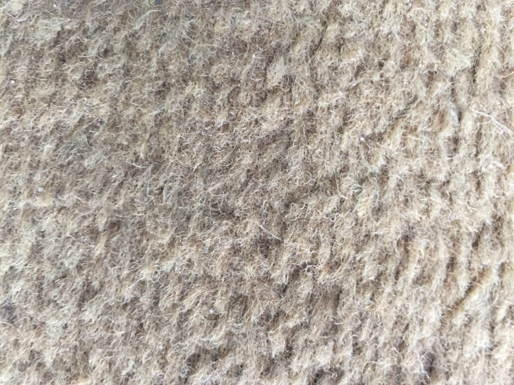 Dirty light brown Carpet