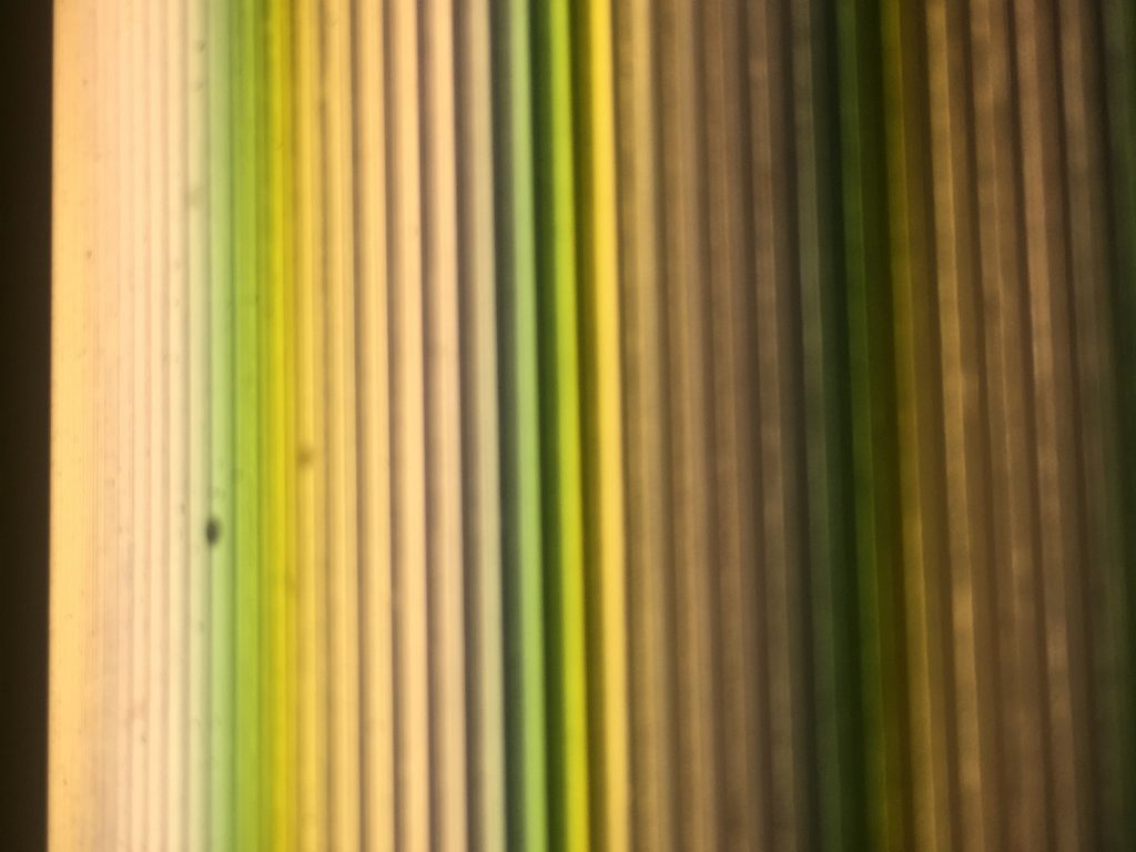 Shades of yellow and green in vertical stripes creating abstract texture