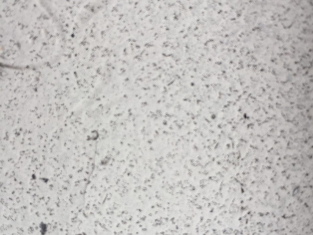 White surface with speckled black spots throughout