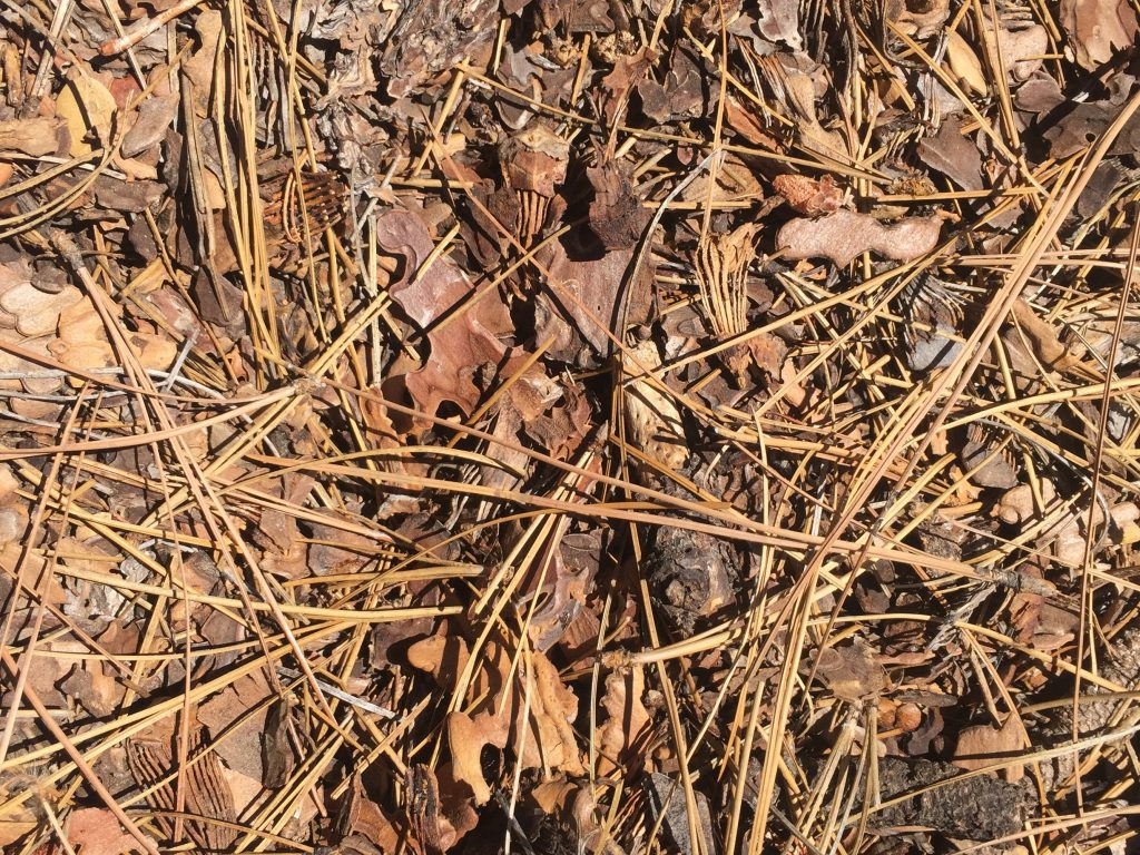 Dried brush pile of pine needles and dead leafs