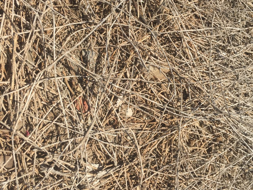 Light brown dead pine needles stacked texture