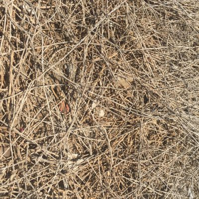 Small sticks in brush pile with light brown color