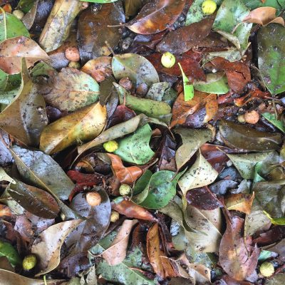 Green, yellow, and brown wet leaves in pile