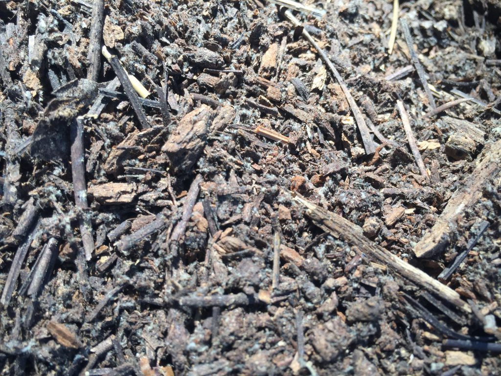 Pile of natural debris featuring dark brown sticks, dirt and chunks of wood