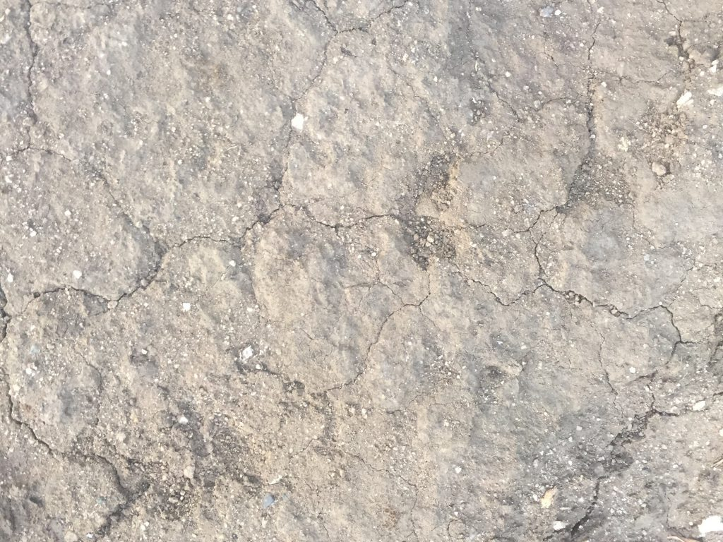 Light brown cracked earth stock texture