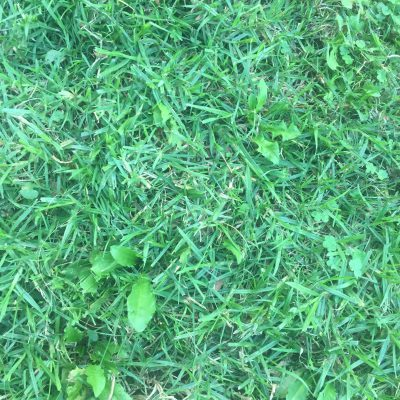 Dark green unkept grass