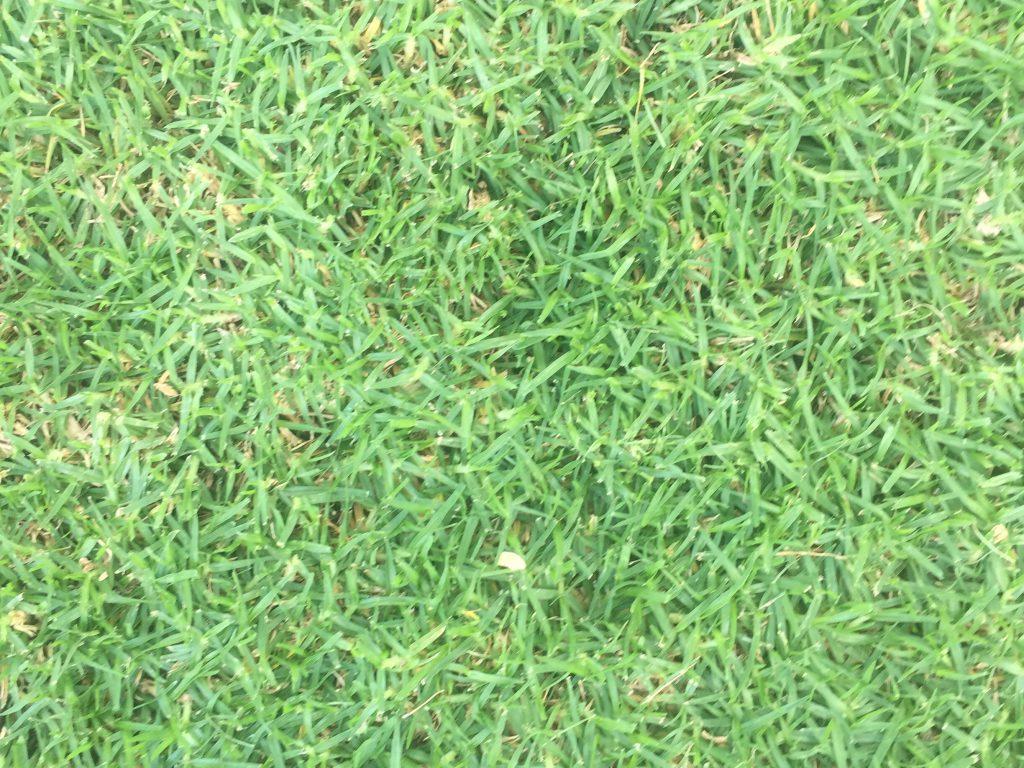 Bright green grass texture