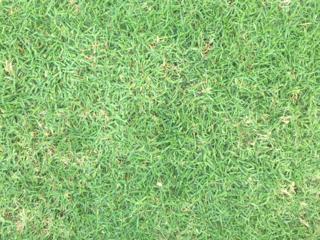 Wide shot of crab grass stock texture