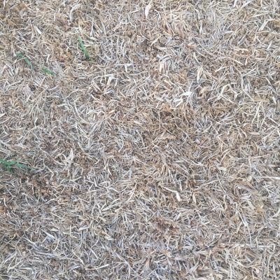Light brown matted dead grass texture