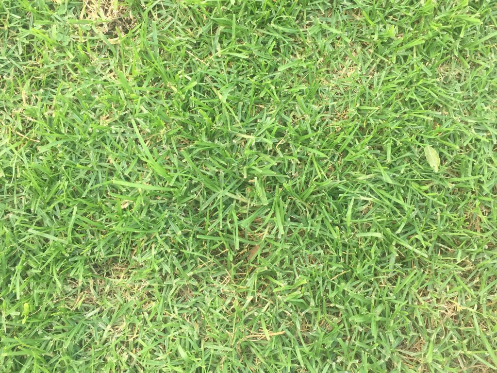 Green grass stock texture