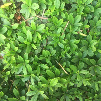 Green grass stock textures