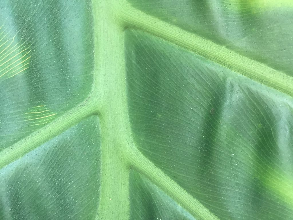 Close up of leaf featuring stem with line work webbing out