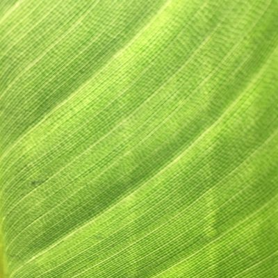 Lush green leaf with cellular pattern and diagonal lines