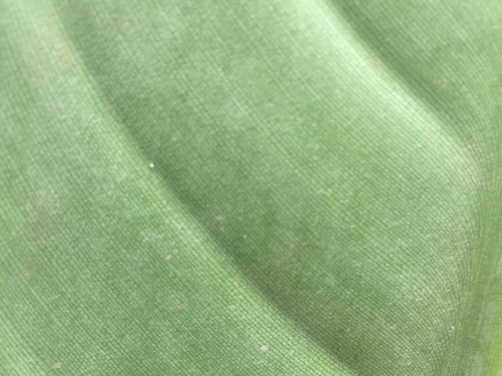 Big green leaf close up