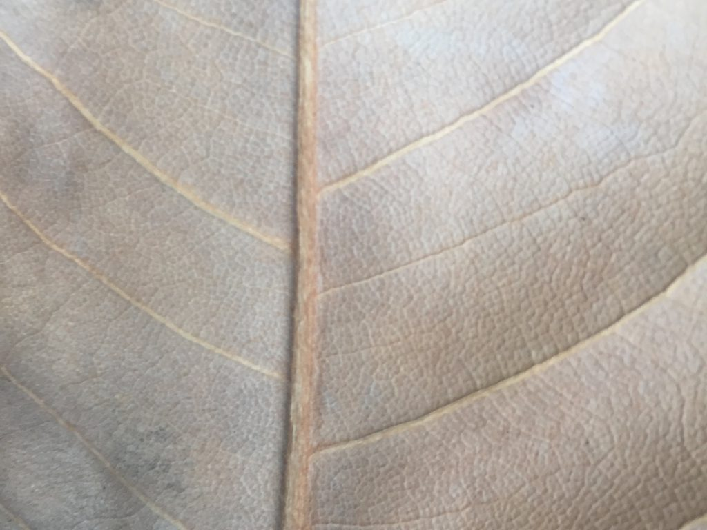 Leathery dead brown leaf with cell pattern texture