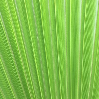 Bright green palm leaf with lines of texture
