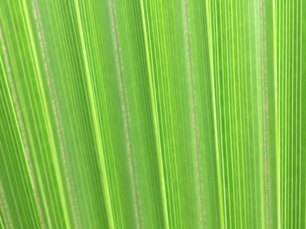 Vertical lines of bright green palm leaf