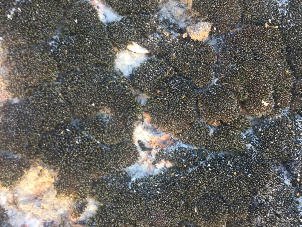 Black mold growing on earth with furry texture