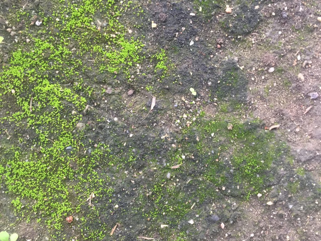 Bright green moss growing on dirt with rocks