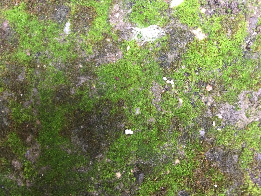 Green moss covered rock