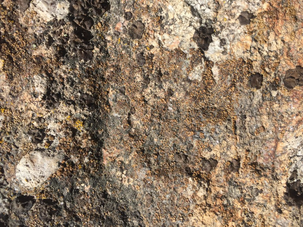 Rock with old mold and sap spots