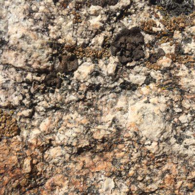 Close Up Granite Rock With Black Sap