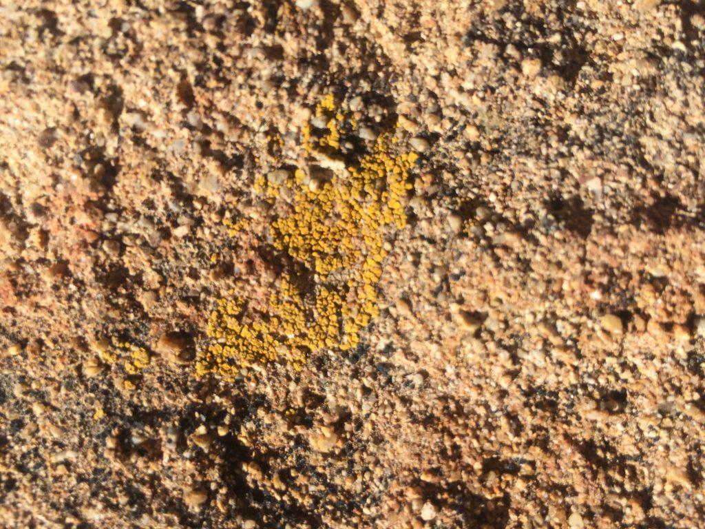Close up of bumpy pink rock stock texture
