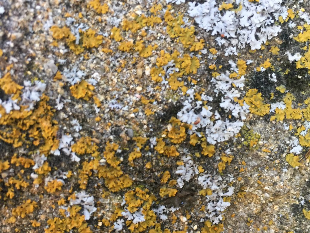 Rock with Yellow and White Spots of moss
