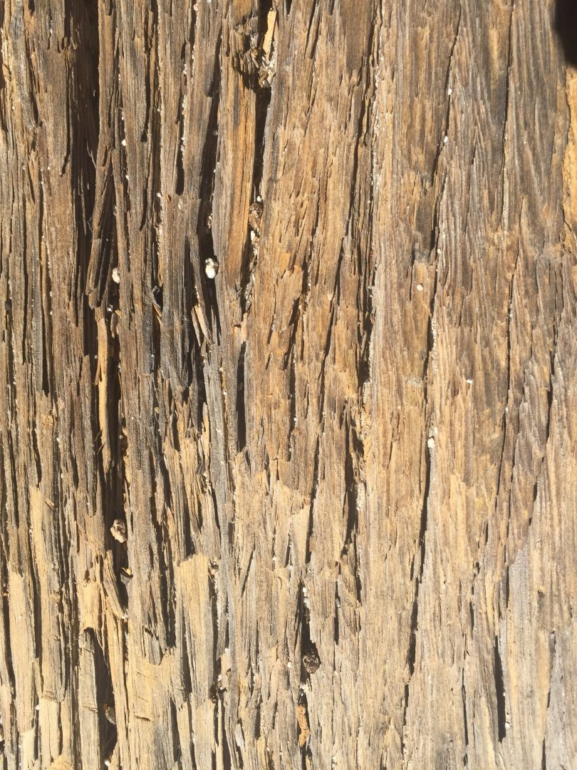 Dry Dead Splintered Wood Texture | Free Textures