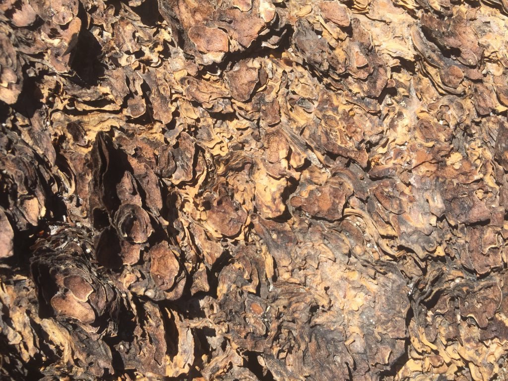 Flakey Tree Bark Texture Free Stock Image