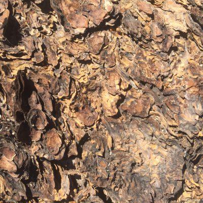 Flakey Tree Bark Texture Free Stock Image