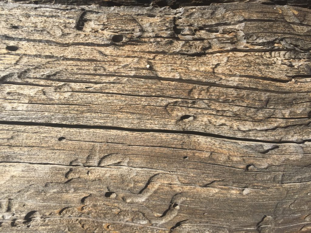 Dead tree wood grain texture with deep grooves