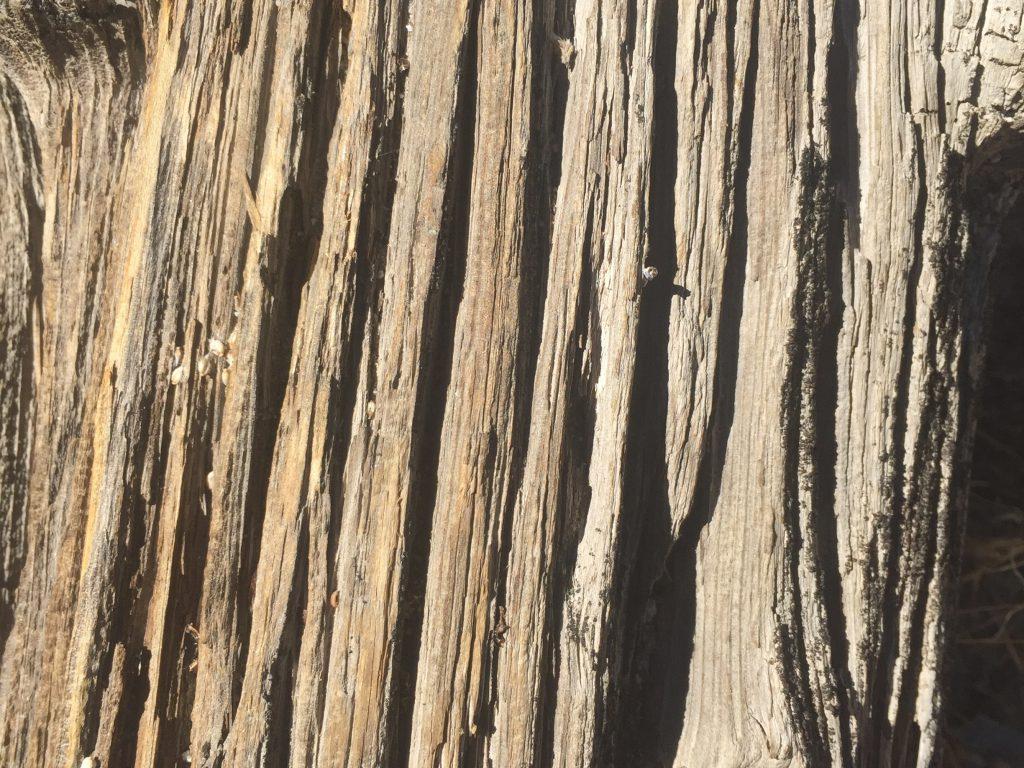 Bark Close Up Texture