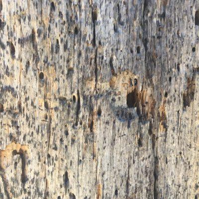 Dead Wood Texture Close Up
