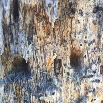 Dead Wood Tree Texture
