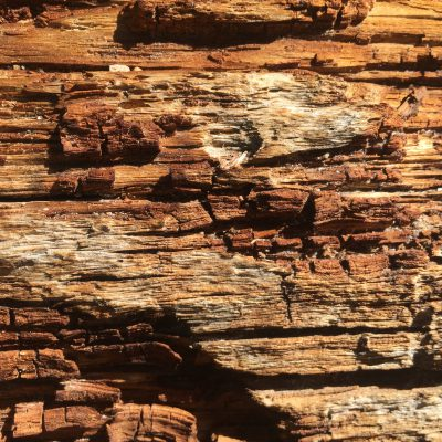 Dead Wood Stock Texture
