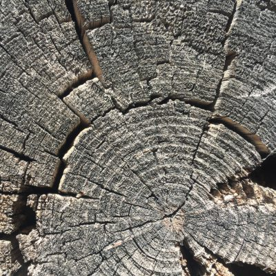 Dead Wood Rings Texture Stock