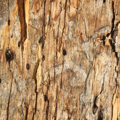 Dead Wood Stock Texture