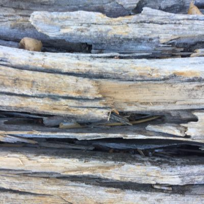 Dead Wood Close Up