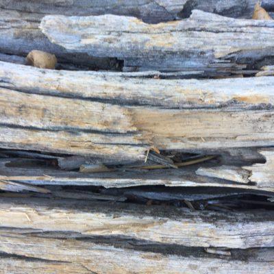 Dead Wood Close Up