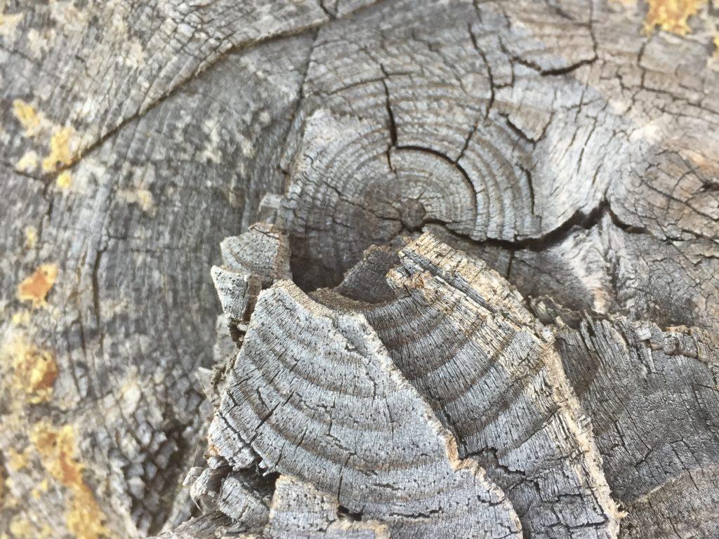 Tree Wood Texture