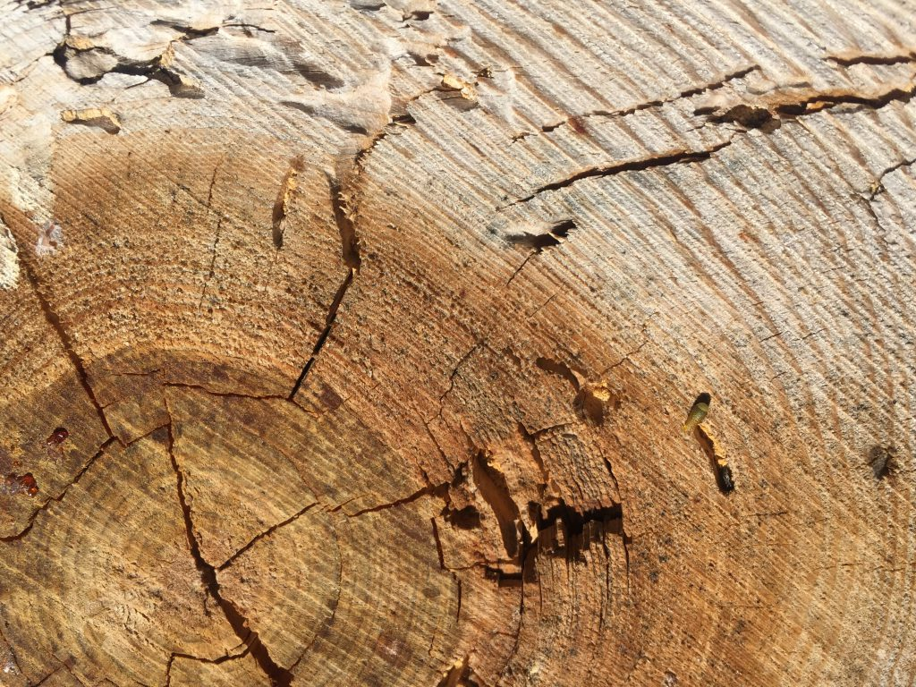 Stock Photo Texture Wood Rings 00041   Free Textures