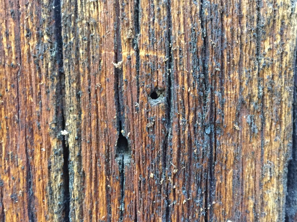 Wood Grain Close Up