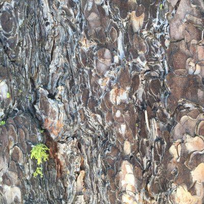 Bark Stock Texture