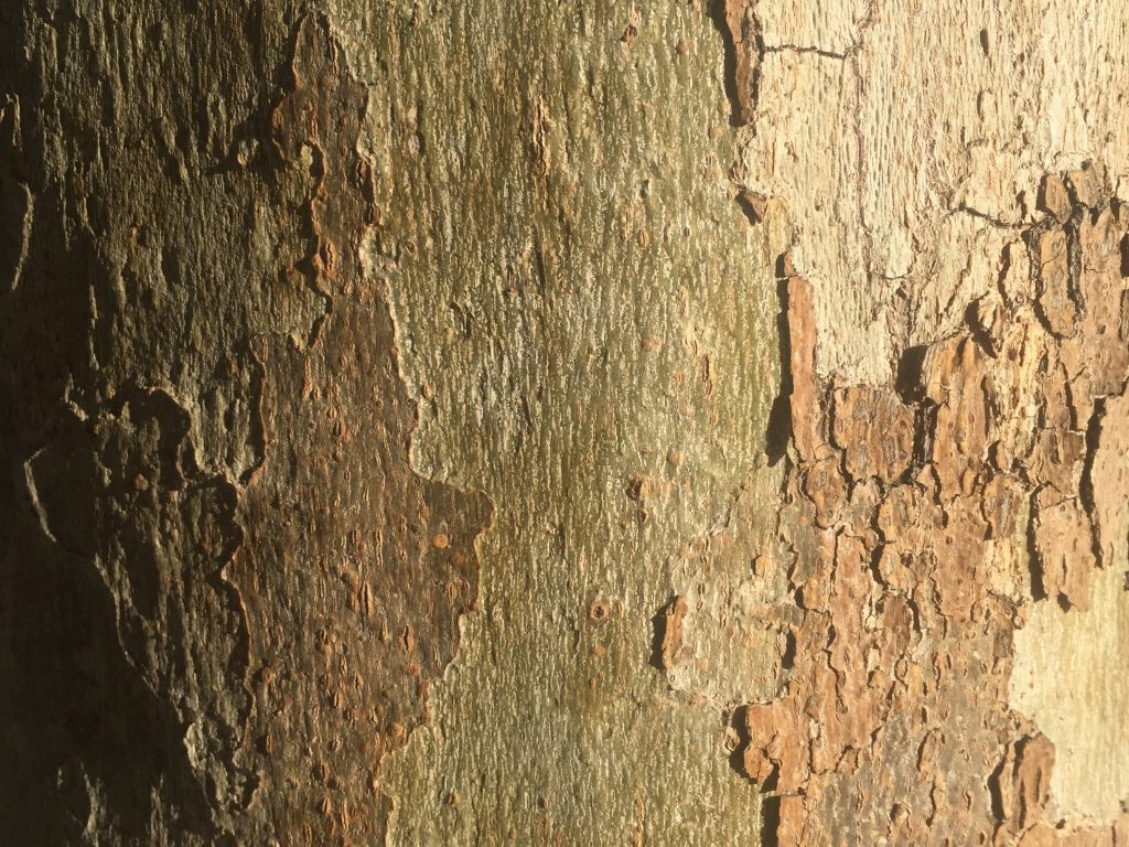 Bark Close Up Free Texture