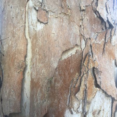Close Up Bark Texture