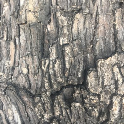 Bark Close Up Stock Texture