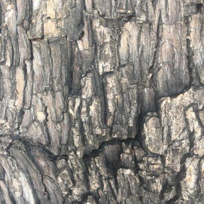 Bark Close Up Stock Texture