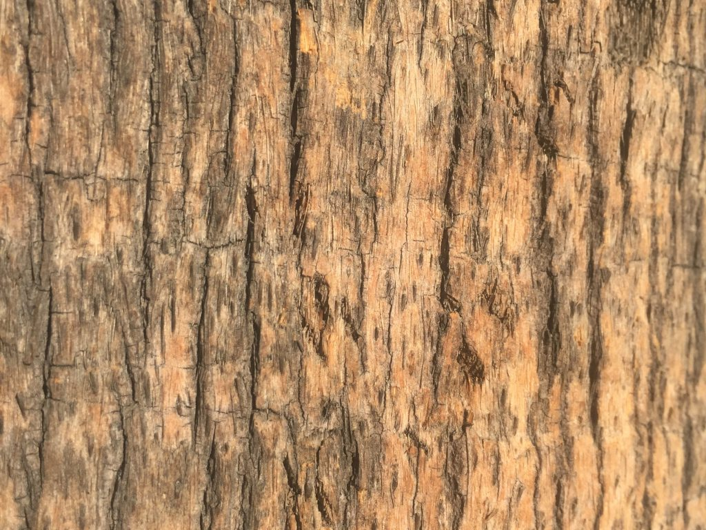 Close up of pattern in tree Bark Stock Texture