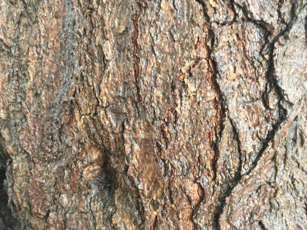 Bark Close up Tree Texture